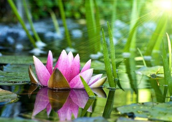 10 хороших ритуалов, которые желательно применять каждому